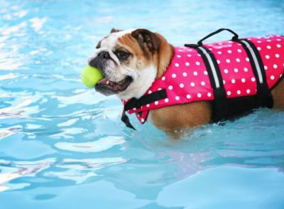 How To Choose Life Jacket For Pets