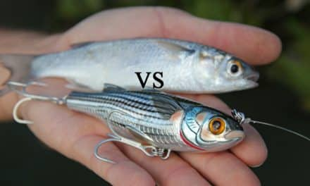 How to Choose the Best Baits for Each Season