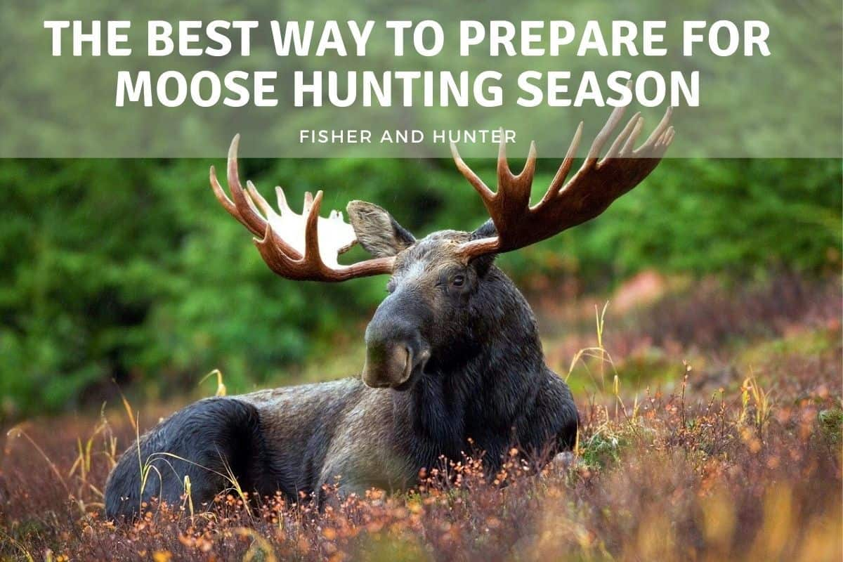 How to prepare for moose hunting season