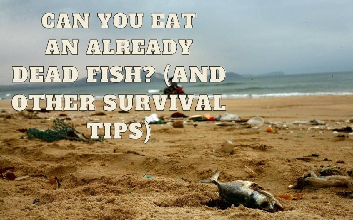 can you eat a dead fish