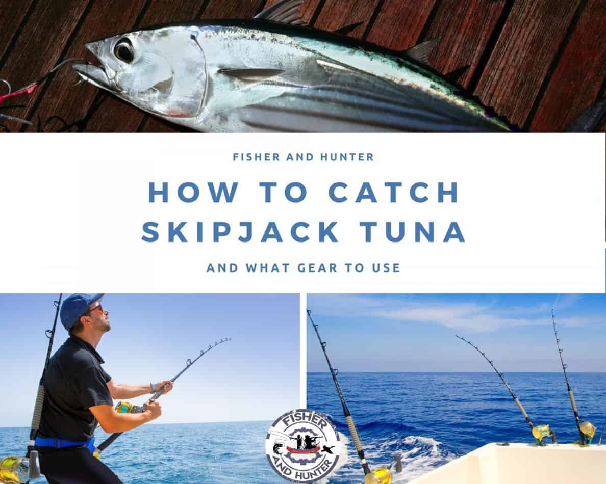 How to catch skipjack tuna