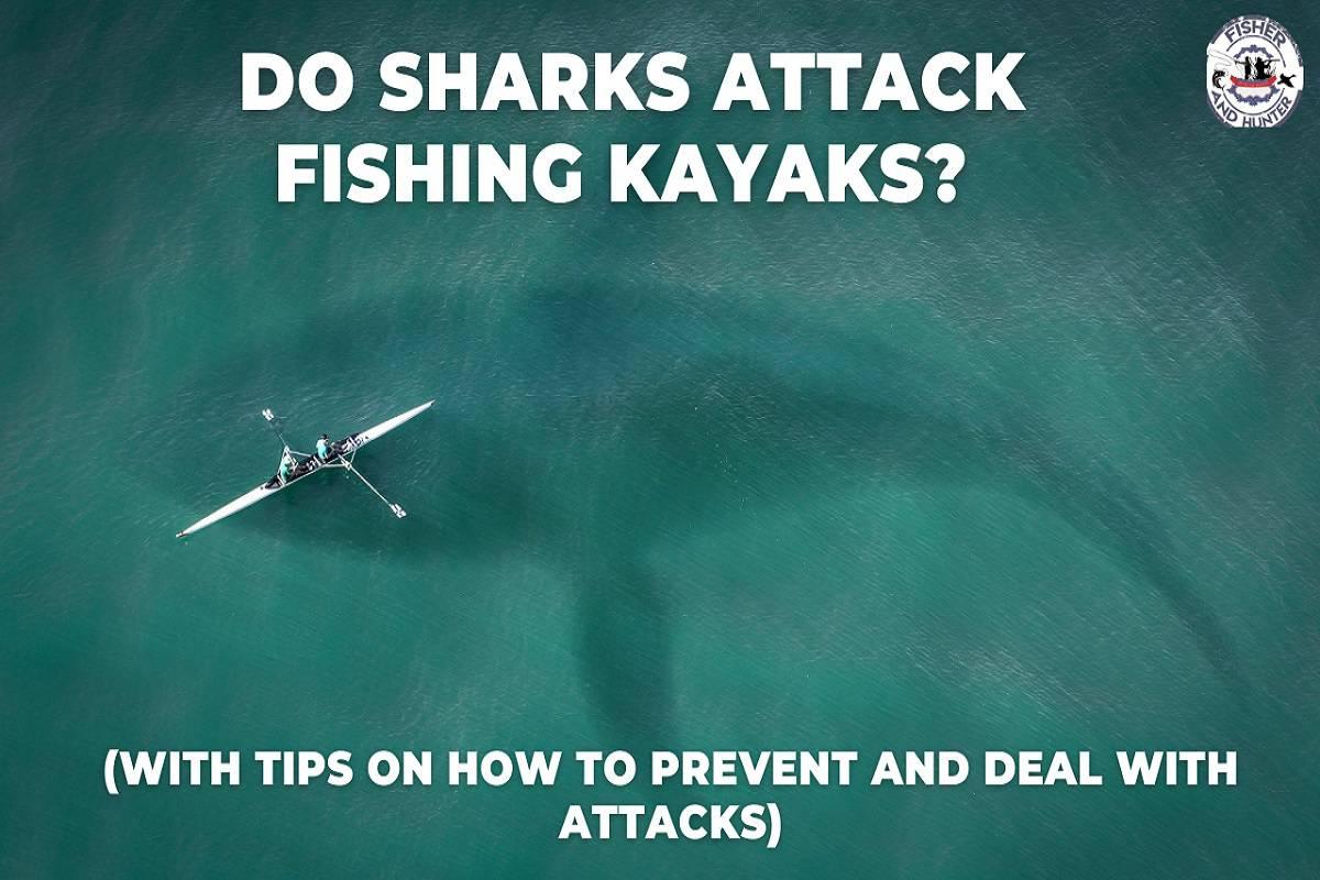 do sharks attack fishing kayaks